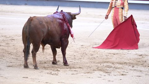 Man bullfighter dressed in bullfighting costume.