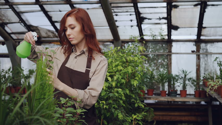 Pretty red-haired woman is spraying plants and checking seedlings inside spacious greenhouse. Profession, growing flowers, workplace and people concept.