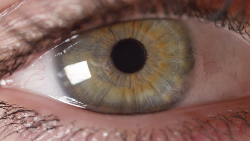 SLOW MOTION MACRO Girl's green eye with brown streaks curiously looking left and right. Woman wearing make up on long opens eye to continue reading. Pupil quickly contracts in brightly lit living room