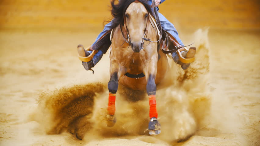 Horse sliding stop into the camera in slow motion 4K. Long shot tracking beautiful western quarter horse galloping towards the camera and sliding throwing sand all around the arena. | Shutterstock HD Video #1011584948