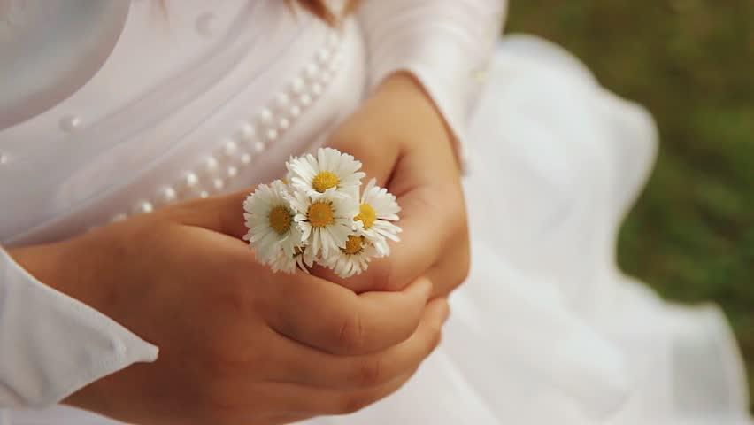 daisy flowers in girl hands