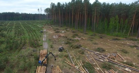 View of the deforestation area. Operator of drone stands on road