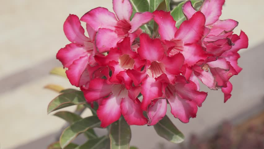 Beautiful plant with a red flowers stock footage video