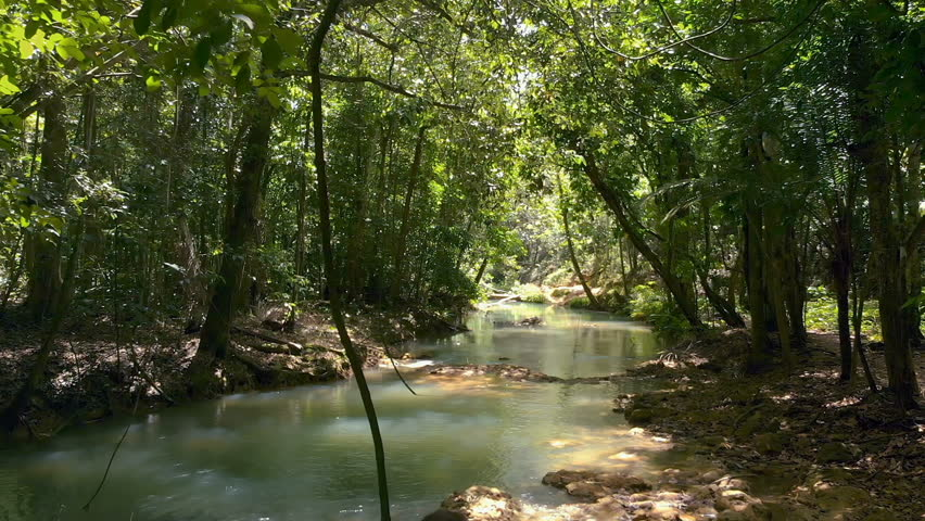 Flying Thru Jungle | Shutterstock HD Video #1011906608