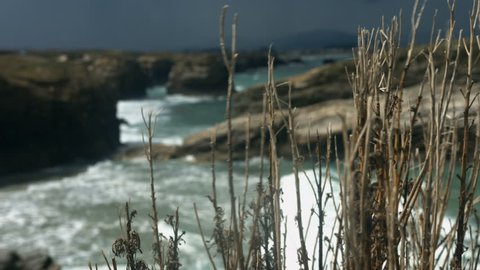 Stunning clips and strong waves with a shrub in the foreground. Cliff view at Costas do Catedrais in Galizia, Spain