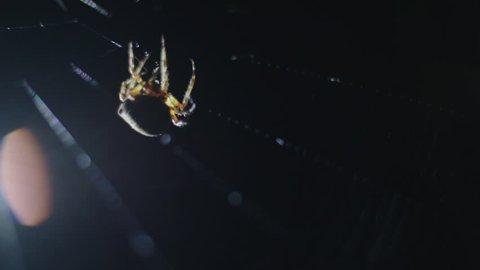 Big spider on web close up