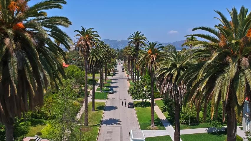 PALM TREES IN LOS ANGELES, CALIFORNIA. | Shutterstock HD Video #1012207778