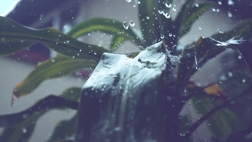 SLOW MOTION, CLOSE UP, MACRO, DOF: Big drops of rain fall on the palm's smooth and long green leaves during an intense storm. Fresh water splashes over the tropical plant in vacation house backyard.