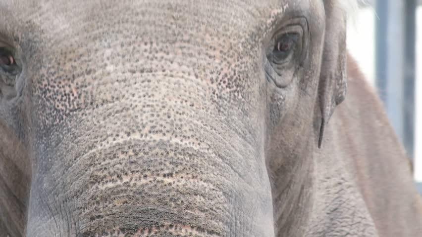 Head of an elephant, close-up | Shutterstock HD Video #1012347338