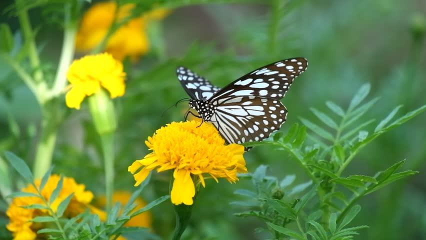 Butterfly on flower, Butterfly feeding on flower #1012375058