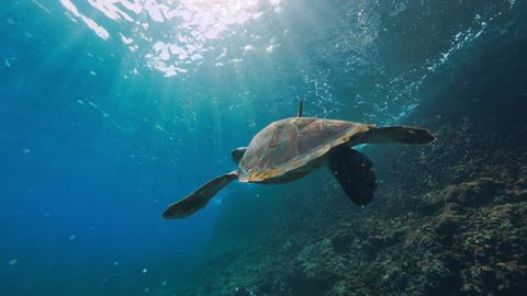 Sea turtle underwaer against colorful reef with ocean waves at surface water