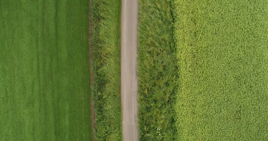 4K Aerial of A Man Running on a Path road shot from above through Green Grass Fields. British Countryside Farm Land in the Summer. A Fitness Runner on a Long Straight Road training for marathon