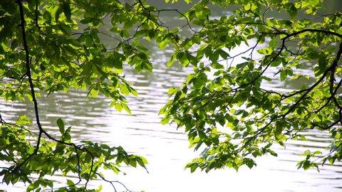 tree leaves on the lake.