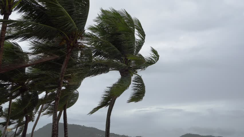 Strong wind bends the coconut tree at the sea coast | Shutterstock HD Video #1012723208