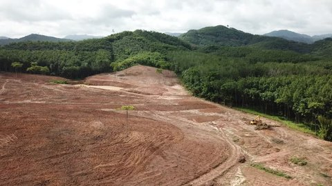 Deforestation. Forest (rainforest) cut down in Borneo to make way for palm oil plantations