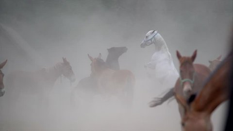 slow motion of horses rearing hind legs and playing in dust and smoke