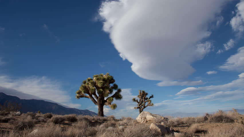 Time lapse low angle view of a lenticular cloud formation hovering in place in blue sky above Joshua Trees in the Owens River valley and the Sierra Nevada mountains in the Mojave desert in California