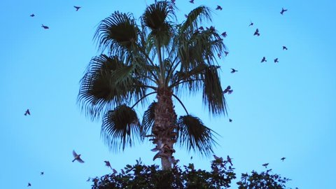 Palm tree with flying birds. Large flock of birds flying above tropical tree in hot summer day. A lot of birds fly over palm tree. Summer palm on blue sky background