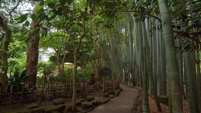 Walking through a Bamboo Forest in Japan | Shutterstock HD Video #1013148758