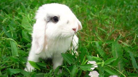 rabbit on green grass, white rabbit little rabbit, Little white bunny, slow motion