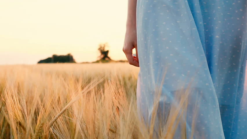 On a sunny day, a woman is walking along a wheat field with a white dress on a nature background. Beautiful girl is walking along wheat field with sun flare at background. Close up Slow motion #1013453348