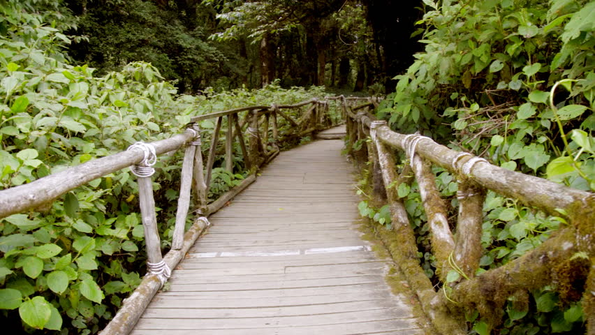 Wooden Walkway Bridge in the Tropical Rainforest at Doi Inthanon National Park, Chiang Mai, Thailand.