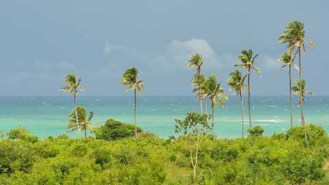 Tiwi Beach dreamscape with palms