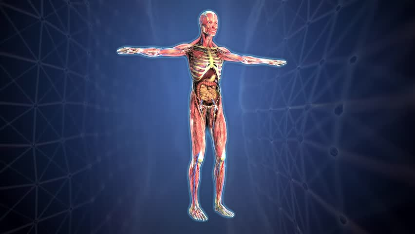 Human Anatomy  the Anatomical Model Stock Footage Video (100% Royalty-free)  1013741858 | Shutterstock