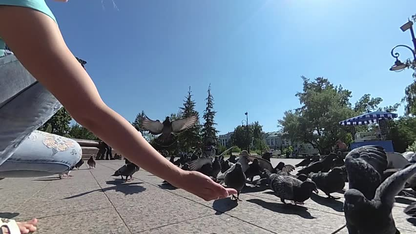 A boy of three years with his mother playing and feeding pigeons in the city Park. slow motion | Shutterstock HD Video #1014019268