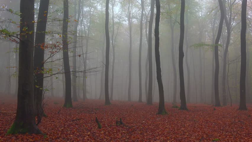 Fog in the autumn beech forest, Freudenburg, Rhineland-Palatinate, Germany, Europe