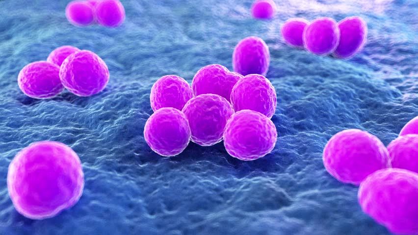 Medically accurate 3d animation of MRSA | Shutterstock HD Video #1014162188