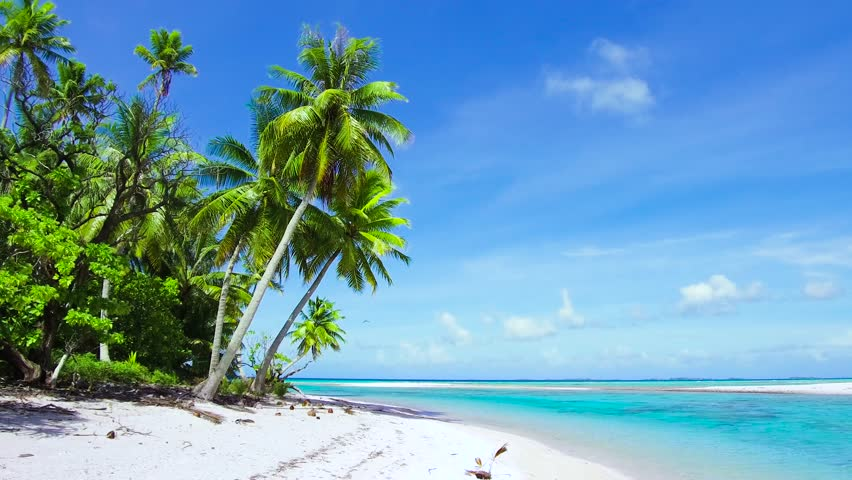 Travel, seascape and nature concept - tropical beach with palm trees in french polynesia | Shutterstock HD Video #1014248078