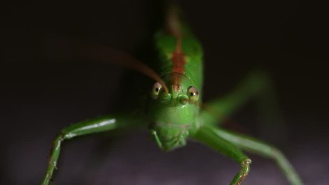 Close up footage of a Grasshopper