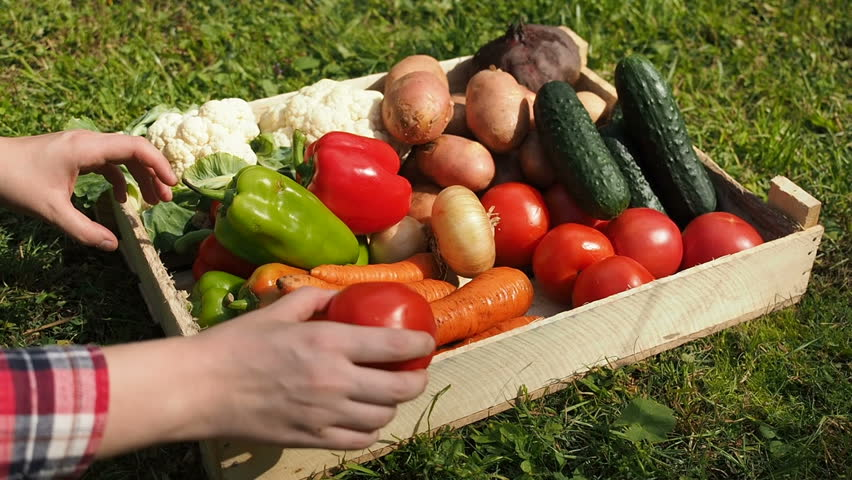 Farmers Market: Farmer's Hands Put Fresh Vegetables Into Box. Organic Vegetables, Organic Farming Concept. Healthy eating, healthy care and clean food concept. Farmer Working Garden Stock Vegetables | Shutterstock HD Video #1014309818