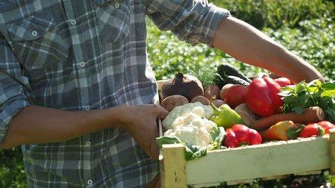 Farmer's Market: Farmer Hands Holding Vegetable Box Full Of Fresh Organic Potato, Carrot, Onion, Pepper, Tomat, Cucumber, Cabbage, Beet. Harvest Agriculture Industry Concept. Organic Farm Food Harvest