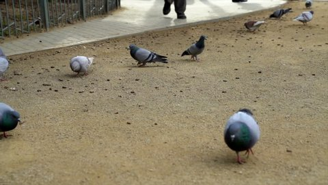 A group of pigeons outside La Sagrada Familia in Barcelona, Spain.