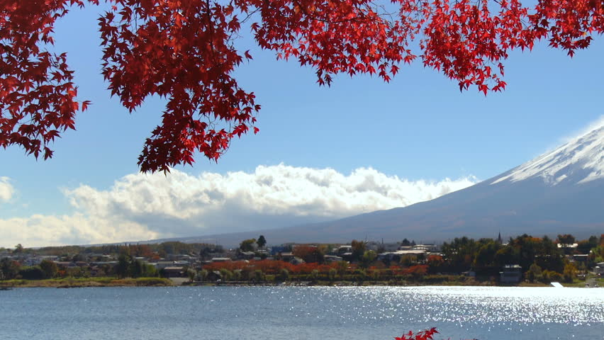 Colorful Autumn in Mount Fuji, Japan - Lake Kawaguchiko is one of the best places in Japan to enjoy Mount Fuji scenery of maple leaves changing color giving image of those leaves framing Mount Fuji. | Shutterstock HD Video #1014427118