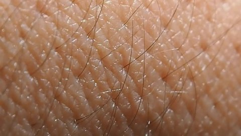 Human skin with hairs macro. Close view of the growth of the hair.