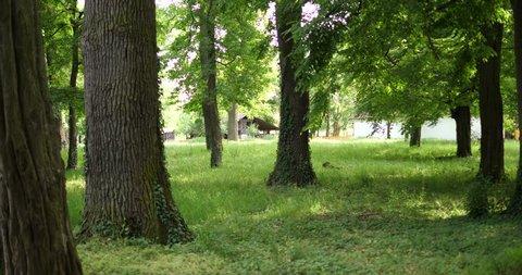 Green forest in Timisoara, Romania