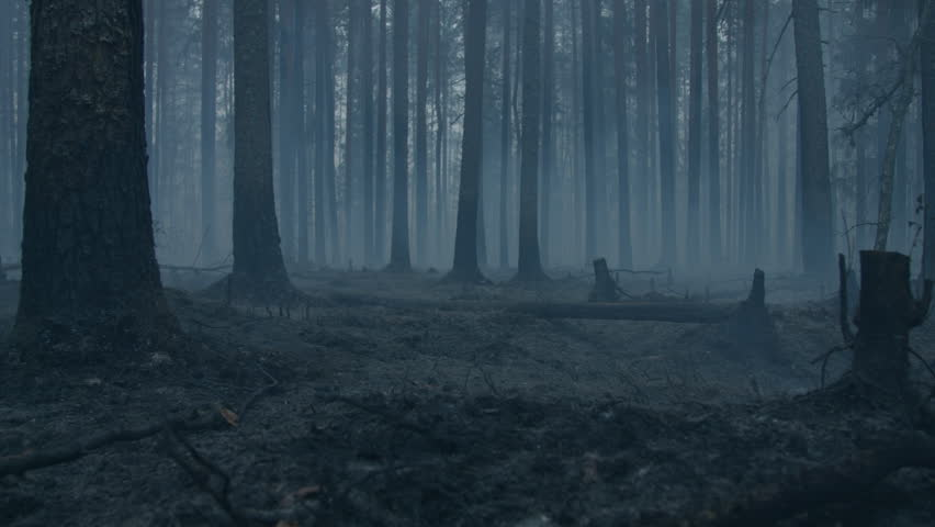Dark mysterious burned forest landscape. Ash covered forest after fire. Smoke rising from ground after wildfire.