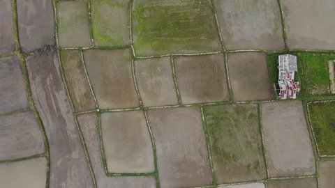 Farmers are planting rice field, Top view aerial video from drone of Rice fields with cottages