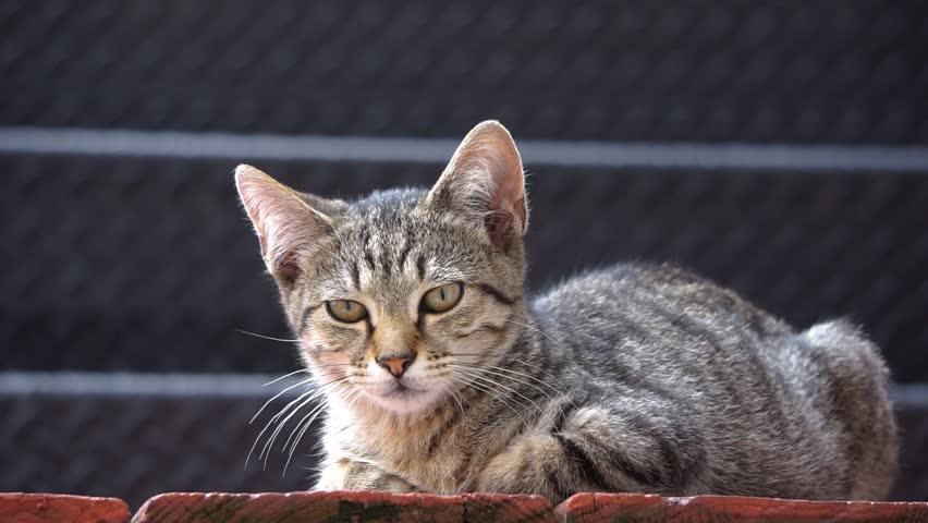 Tired Street Cat Resting