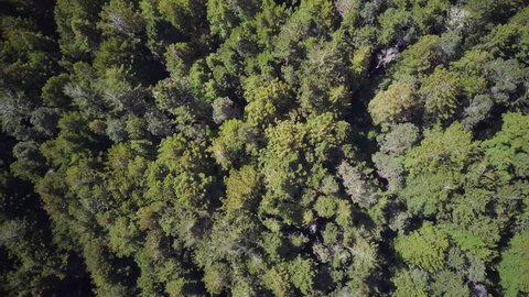 Top View of Trees in Forest
