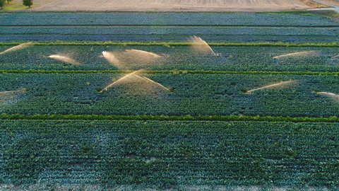 Agricultural sprinkler - irrigation area, aerial view