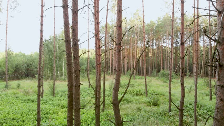 Walk in the woods, smooth shooting in high quality. First-person view. | Shutterstock HD Video #1014950968