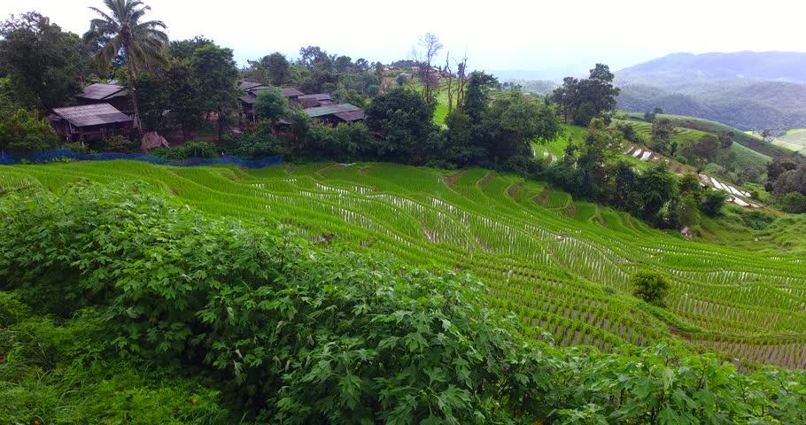 Baan Pa Bong Piang terraced rice fields, CHIANG MAI (Pa Pong Pieng, Mae Chaem, Thailand)