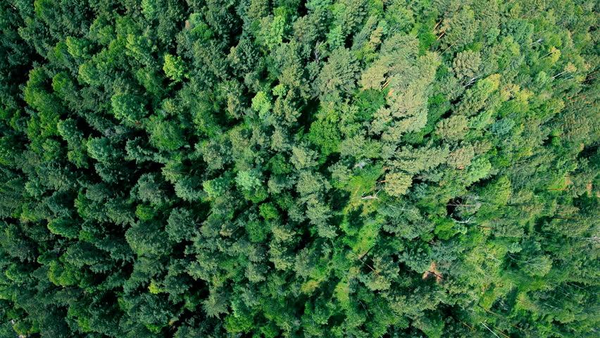 Drone flying forward above beautiful green forest. Aerial vertical shot | Shutterstock HD Video #1015066918