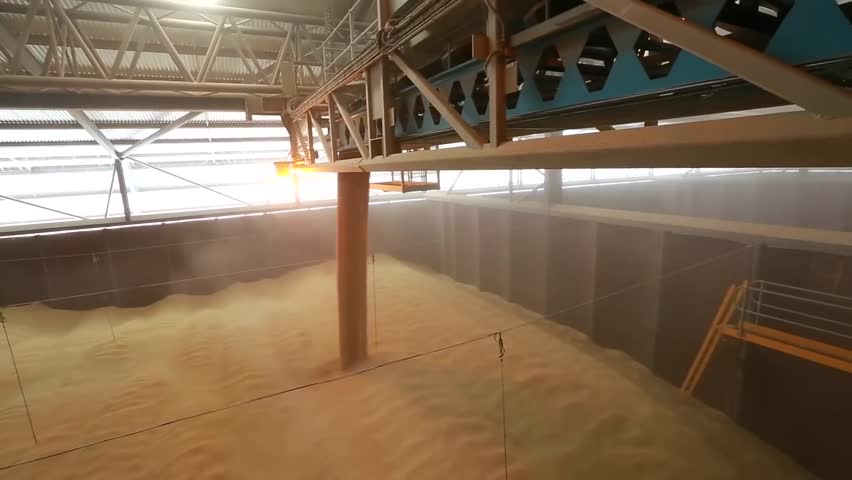 Wheat factory. Spilled wheat grains