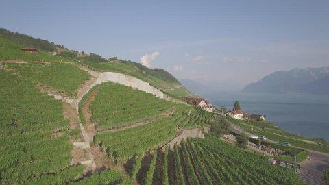 4K ungraded Aerial footage of Vineyard fields in Terrasses de Lavaux near Lausanne in Switzerland - UHD