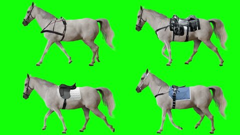 Horse is harnessed and saddled walking. Variations Saddle: sports, racing, cowboy. Animation isolated and looped. Green Screen